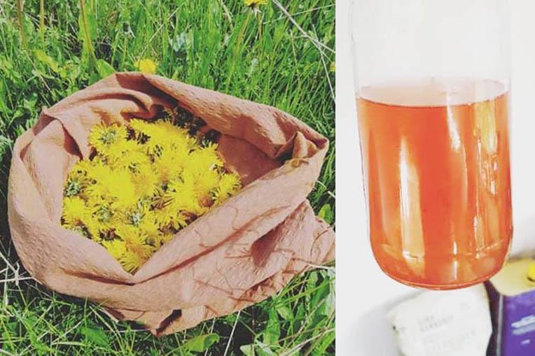 Processer fra mælkebøtteblomst til færdig blomsterhonning
